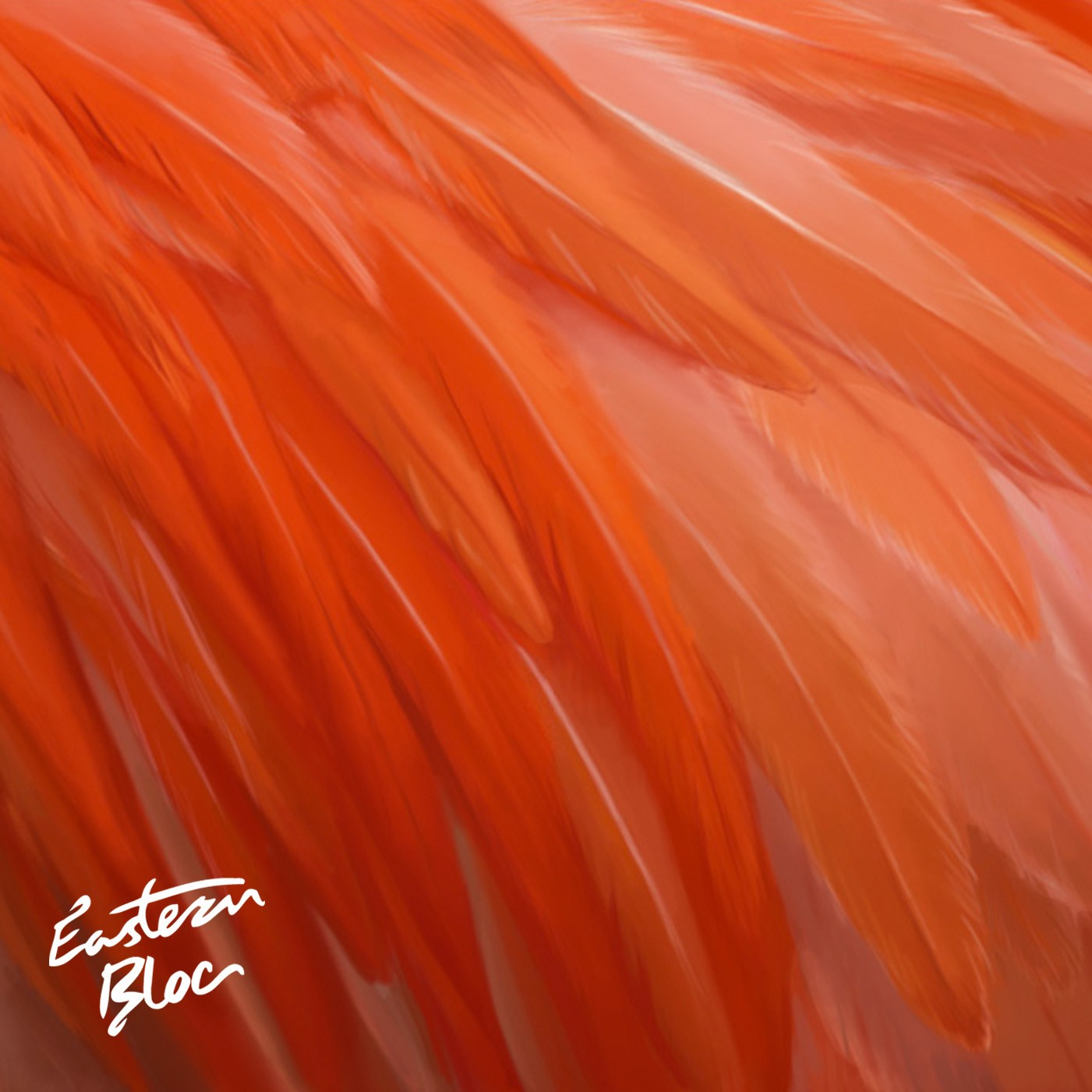 flamingofeathers_rgb1